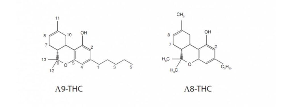 molecula de delta 8 y delta 9